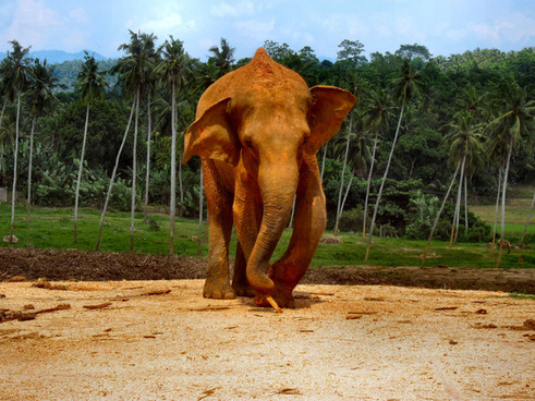 elephants_of_sri_lanka_1_514032